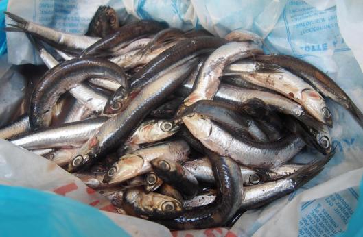 anchois-frais