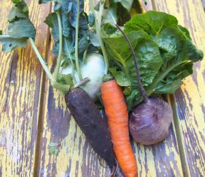 salade-automne-bio-graine-combinaisons alimentaires
