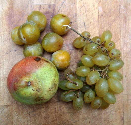 gratin de fruits-fruits d'automne-sans gluten-sans amidon-blog Narbonne-blogueuse Narbonne